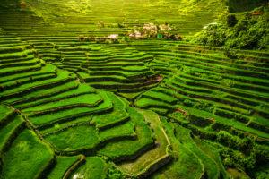 Reisterrassen von Banaue, Luzon