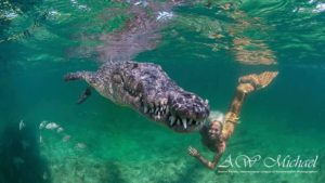 Tauchen Philippinen, Taucherin mit Krokodil
