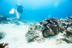 Giant Clam Camiguin