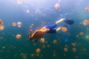 Schwimmen mit harmlosen Quallen
