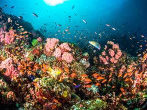 Bohol Tauchen Unterwasser Riff