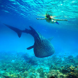Walhaie Cebu