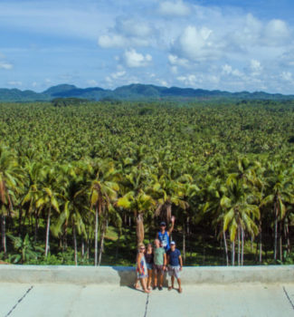 siargao-palm-trees-overlooking